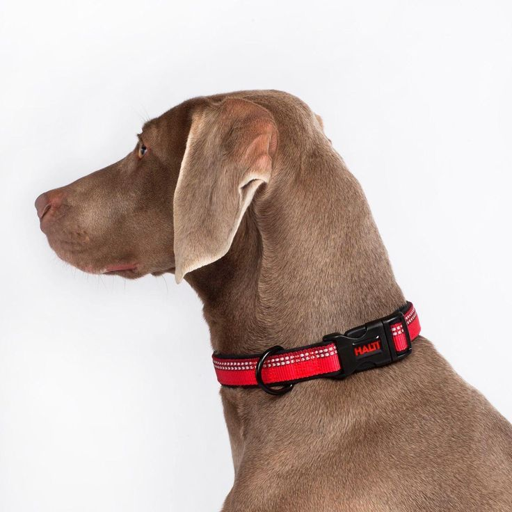The HALTI Collar, this simple yet practical collar is easy to adjust and the button release clasp is strong and secure. There is also an extra loop for the essential name and microchip tags.The HALTI Walking Range boasts the same quality and expert design that our customers have come to expect from The Company of Animals, the makers of the world-famous HALTI Headcollar. Bringing together style and functionality, the range comes in four vibrant colors with a smart two-tone webbing. With…