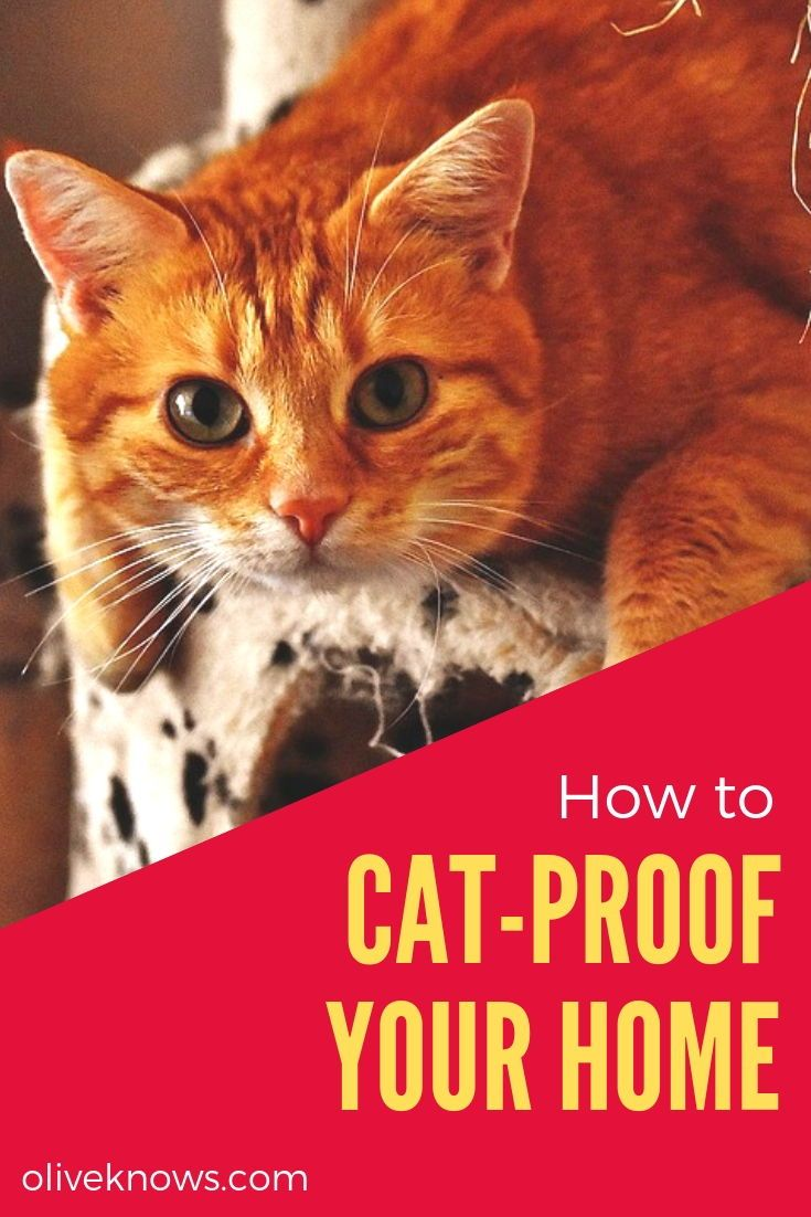 How To Cat Proof Your Home Cat Proofing Cats Cat Safety