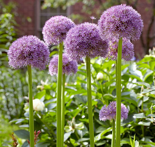 977 best Planting Spring and Fall Bulbs images on ...