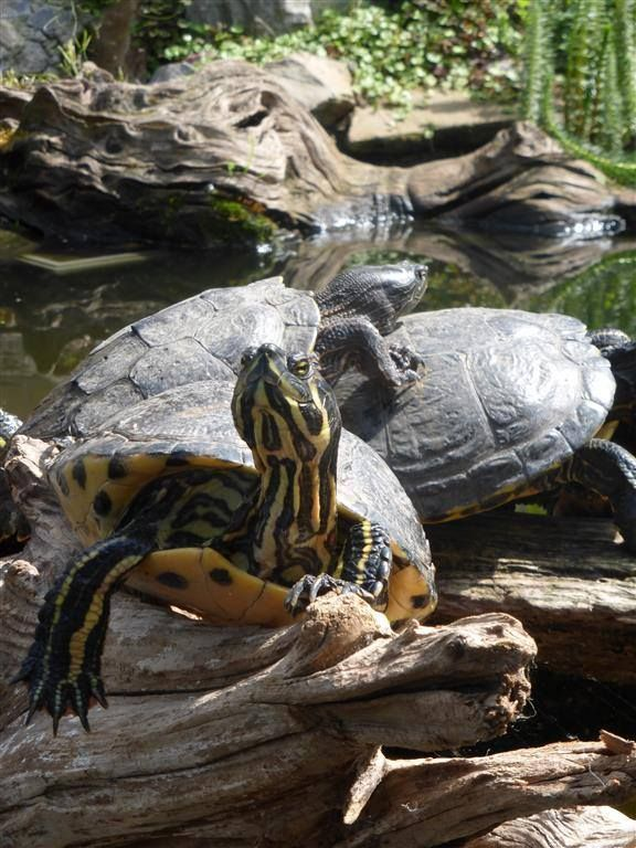 Turtles in the wild