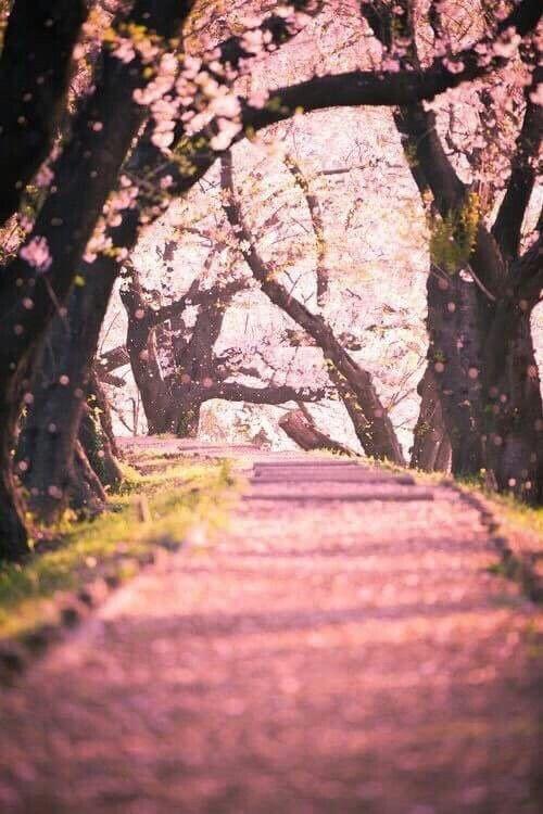 Way full of petals of blossy ?