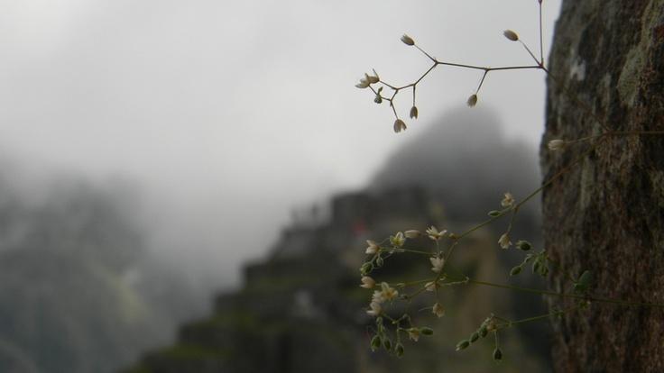 Ruinas de Machu Pichi . Peru