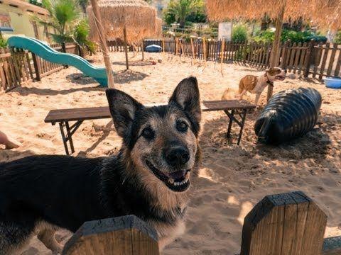 """В Римини открылся пляж для собак - В курортном городе Римини открылся пляж """"Rimini Dog no problem"""" для братьев наших меньших. Наконец-то владельцы собак, отдыхающие на пляже Адриатики, избавились от проблемы """"куда же девать питомца?"""". Хочется полежать у моря, зарядиться"""