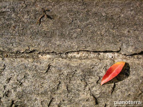 Jasmin leaf above the stone. Varese.