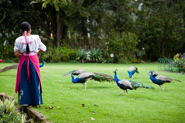 9 Feathery Facts About Peacocks | Mental Floss