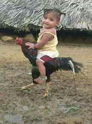 That is one strong chicken!