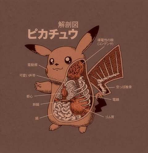 Mejores 74 imágenes de Pokemon en Pinterest | Anatomía, Cosas de ...