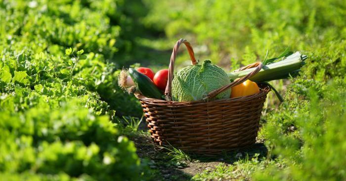 La taxe sur les potagers des particuliers entrera en vigueur dès 2017. Tous les jardins de plus de 20 mètres carré seront taxés à hauteur de 200 euros par an, afin de combler le manque à gagner des producteurs de fruits et légumes.   L'Etat a calculé que les particuliers possédant un jardin potager, achetaient moins de fruits et légumes que les citadins, engendrant un manque à gagner significatif pour lui et pour les producteurs professionnels.   La collecte de la taxe se fera par le biais…