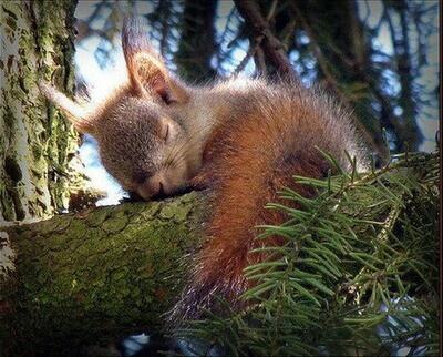 SSShhhh baby squirrel sleeping