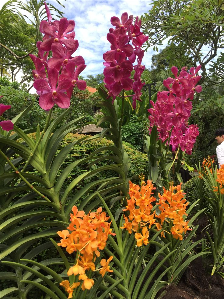 Orchids Garden, Singapore