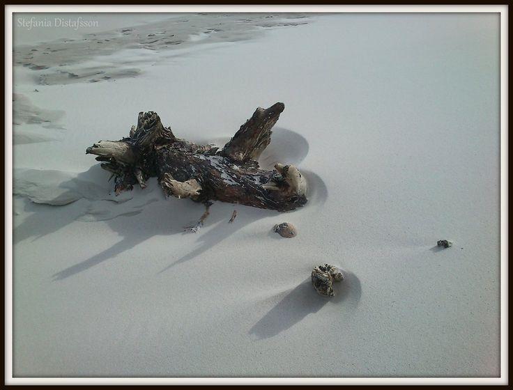 tree limb on the beach by MrsEfi on DeviantArt