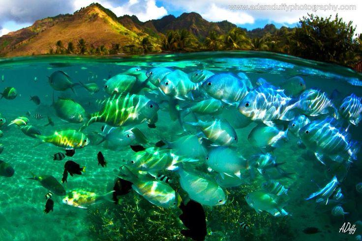 Fishbowl #tahiti
