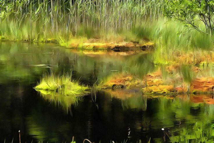 Refleksjon i vann Østmarka, Oslo, Norge