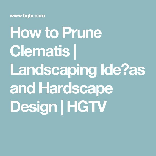 How to Prune Clematis   Landscaping Ideㅇas and Hardscape Design   HGTV