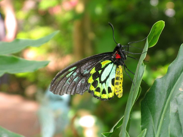 Butterfly Conservatory in Key West
