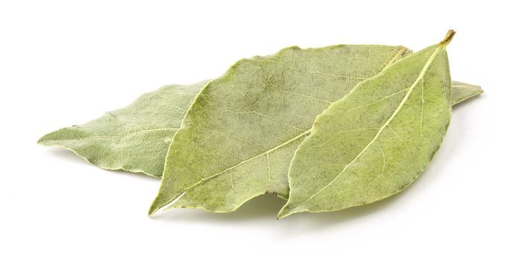 Folhas de louro acalmam o estômago | SAPO Lifestyle