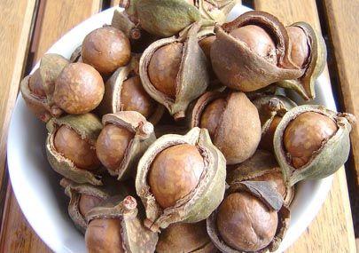 Olio di macadamia 100 ml € 6,00