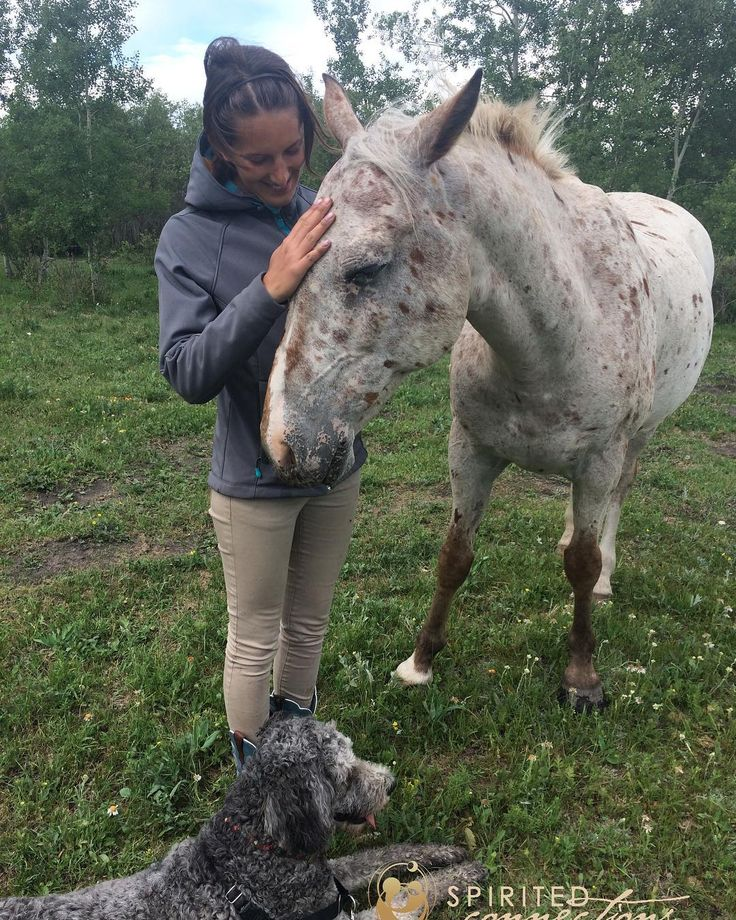 #therapyhorse Gus loves his #cuddles from his human #friends  And he loves the company of #therapydog Poppet. These #animals make for the best #summerdays  Who wouldn't #love hanging in the #field with this crew?!?  #appaloosa #doodle #doodlesofinstagram #horsesofinstagram #friendsforever #horse #dog #horses #dogs