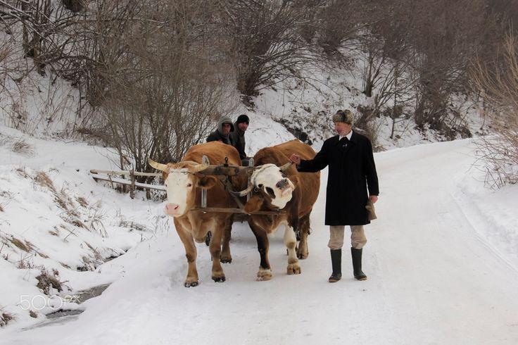 Life in the countryside - Life in the countryside.