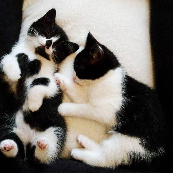 Black and white kittens                                                       …