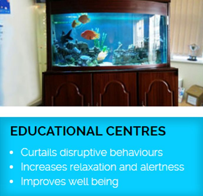 EDUCATIONAL CENTERS Curtails disruptive behaviours Increases relaxation and alertness Improves well being http://rentaquarium.co.uk/ #RentAquarium, #RentanAquarium, #AquariumLondon, #LondonAquarium, #London