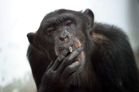 s-monkey
