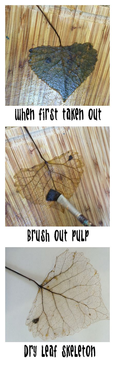 The best tutorial on how to make Leaf Skeletons! Use Washing Soda!!! Not Baking Soda!!