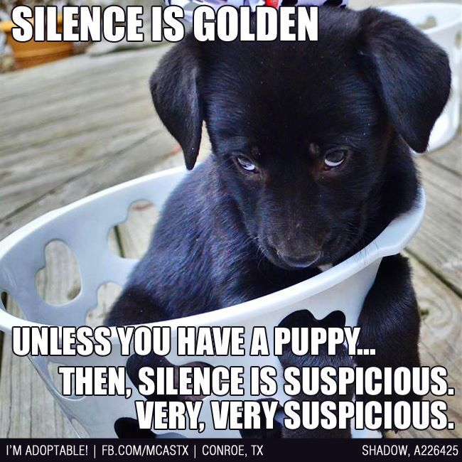 This is so true......if you can't hear Archie he's up to something!