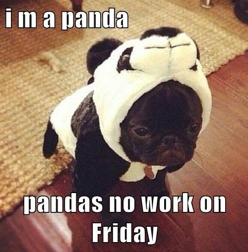 i m a panda... pandas no work on Friday... Happy Friday Everyone! #Dogs #Friday #Funny #Panda #Puppy
