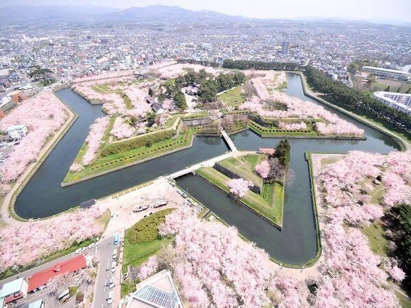 "tokio-fujita: "" Sakura full bloom in Goryokaku, Hakodate. Goryokaku was the last fortress of Shogunate army during Boshin War, and where Hijikata Toshizou rested. Now it's this beautiful park. """