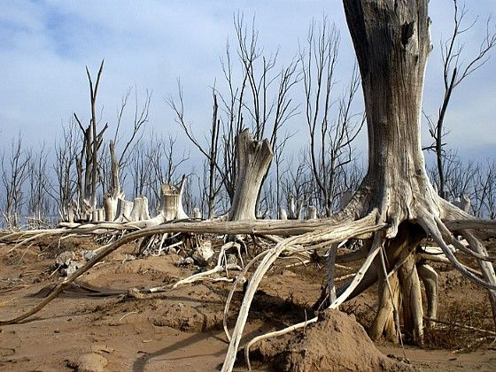 Ruinas del Lago Epecuen en Carhué