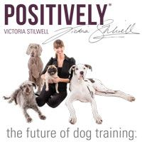 """""""No"""" Is Not Enough Information 
