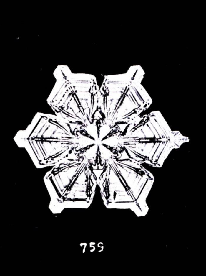 wilson bentley snow crystals
