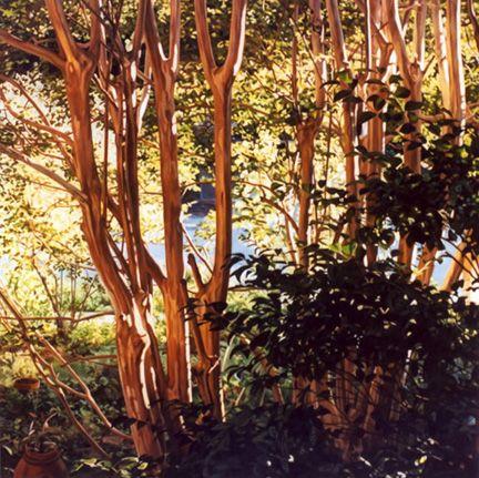 """Rebecca G. Fagg - Paysages""""Crêpe Myrtes"""" 2002  Huile sur toile de lin  40 """"x 40"""""""