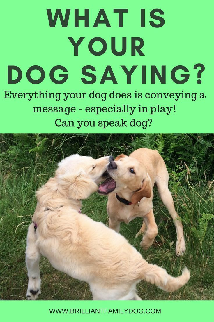 Just Like Us Dogs Never Do Anything For No Reason Aggressive