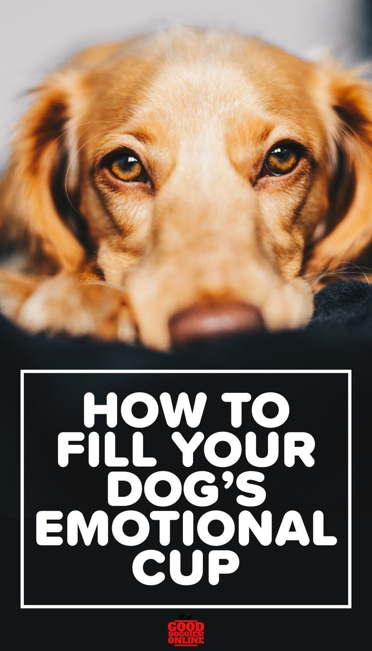 How To Fill Your Dog S Emotional Cup In 2020 Good Doggies Online