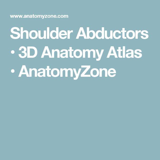 Shoulder Abductors • 3D Anatomy Atlas • AnatomyZone