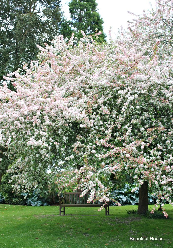 Cruden Farm In Spring Beautiful House Blossom Trees White Gardens Pink Blossom Tree