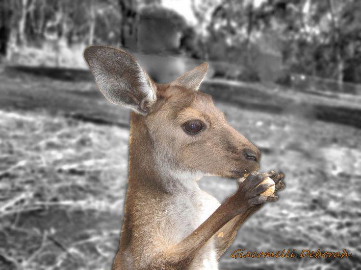 Kangaroo praying by Deborah Giacomelli