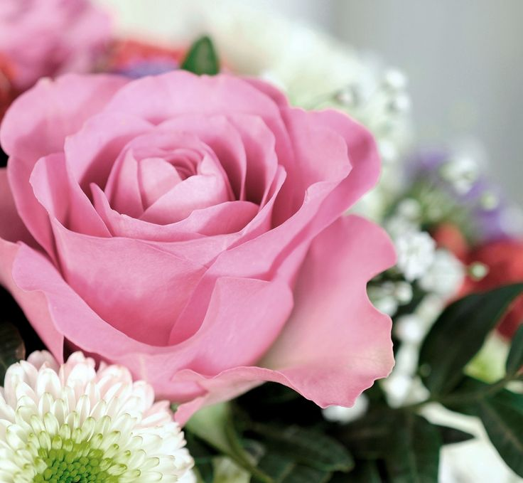 """Schutzengel"" #geschenk #geburtstag #engel #freude #freundschaft #blumen #rose #pink #strauß #ueberraschung #blume2000 #blume2000de"