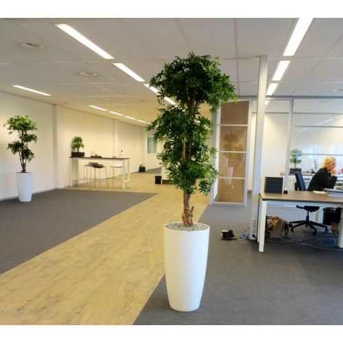 These Bonsai Shaped Artificial Acer Trees Are A Great Way To Add A Carefree  U0027green · Artificial PlantsOffice BuildingsBonsaiOfficesTreesHtml