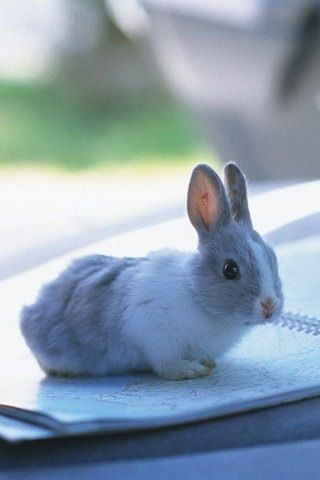 17 Best Images About Bunnies On Pinterest Cute Baby