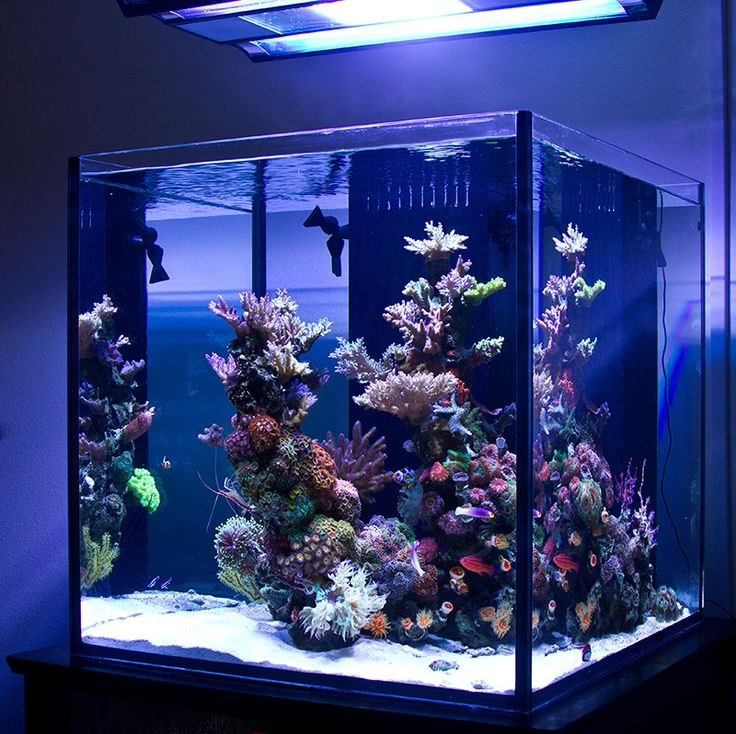 25 best ideas about reef aquarium on pinterest marine for Aquarium recifal complet
