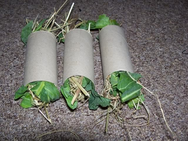 Home made rabbit toys? - Page 3 - Rabbits United Forum