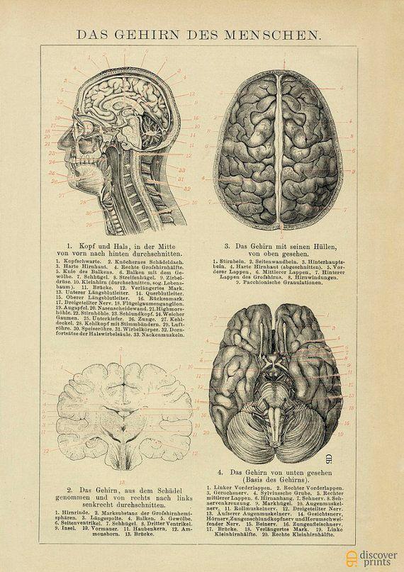 Das menschliche Gehirn archivalische Druck - Neuroscience Illustration - medizinische Poster.