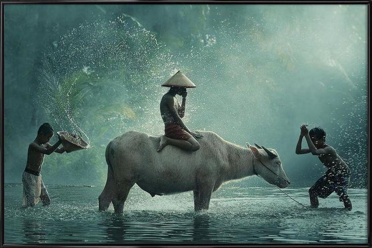 Water Buffalo - Vichaya als Plastic Framed Print door 1x | JUNIQE
