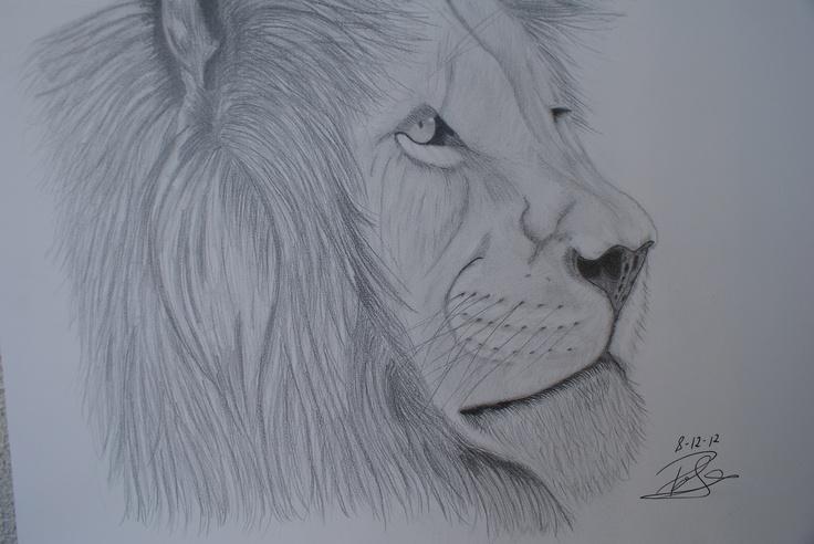 Lion! My last draw!