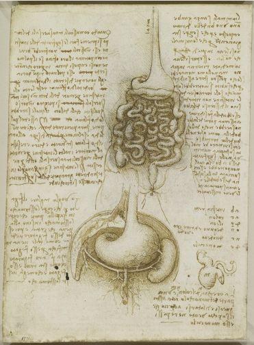 El tracto gastrointestinal, y la vejiga 1508