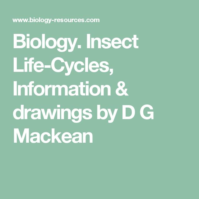 Biology. Insect Life-Cycles, Information & drawings by D G Mackean