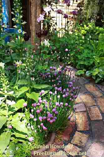 An informal herb garden design with a lovely pathway